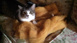 Alvin, convinced that he's helping me to spin by parking himself on my batts of roving.
