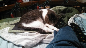 Alvin decided to use my foot as a pillow on Sunday, leading to a lack in productive activity.