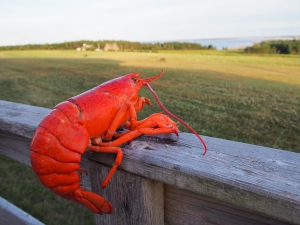 "I am tempted to write a ""Lobster's Day in PEI"" story."