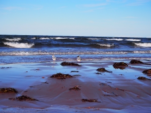 The beach in North Rustico