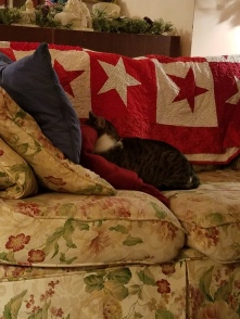 Yes, that is Alvin with his face smooshed into a quilt
